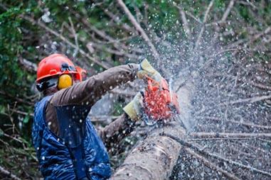 PROarbor s.r.o., Výrub stromu